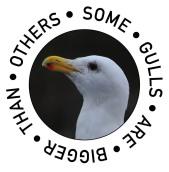 some-gulls
